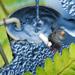 Biologiczne oczyszczalnie wód ściekowych